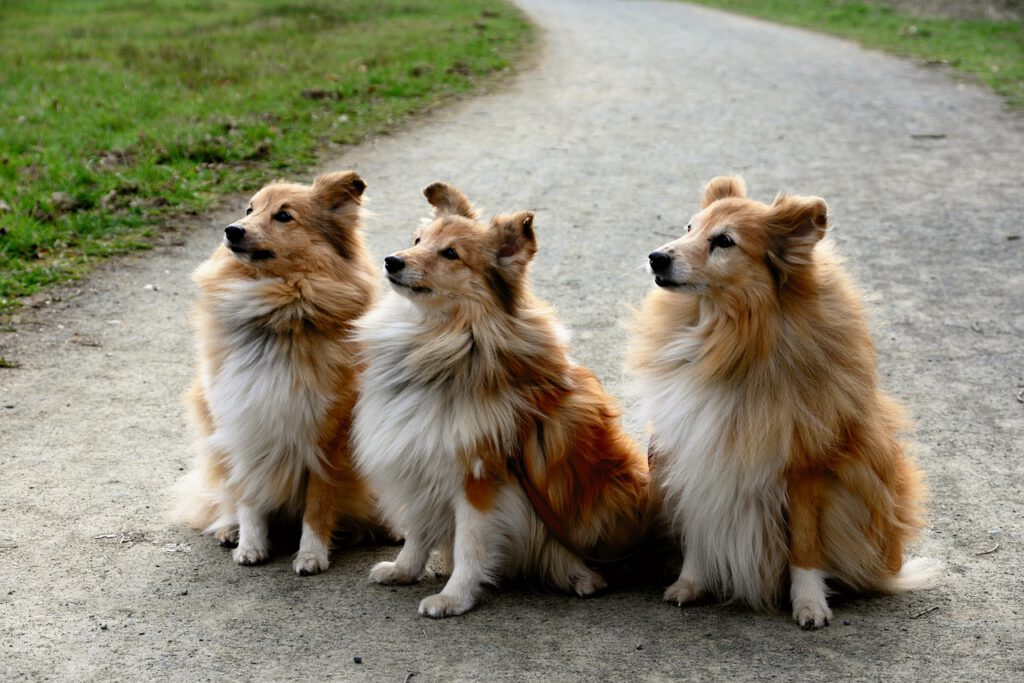 Koira Lapsiperheeseen